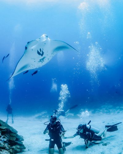 Manta ray hovering over two scuba divers