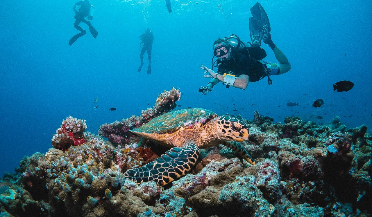 Diving - deal Diving - Turtle 13