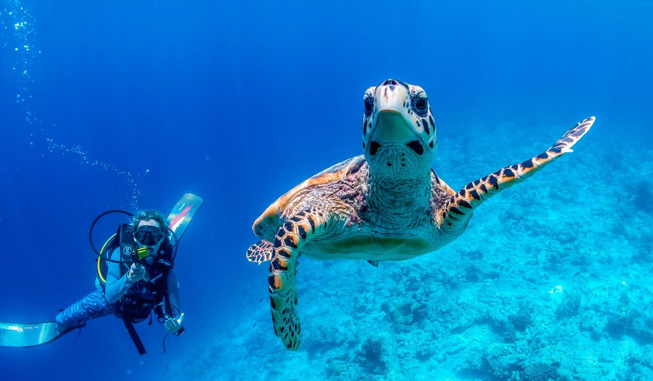 Slider DIVING - Diving, Snorkeling - Turtle