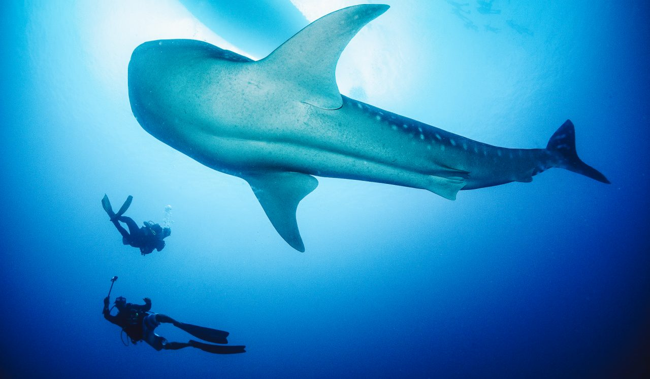 Slider DIVING - Diving - Whale shark 6 dhoni snorkel